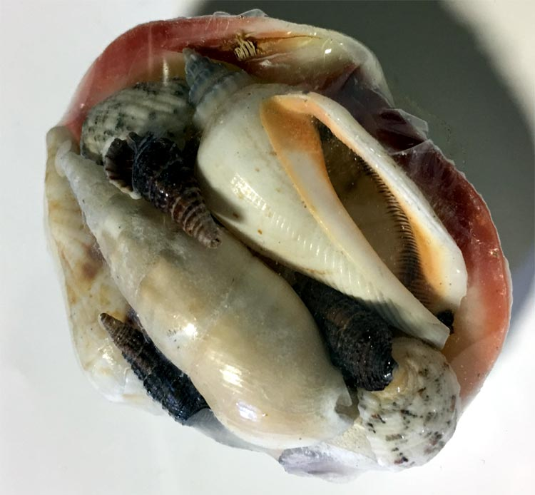 Sea Shells Decoration - Gifts For Women - Holiday Gifts Mart